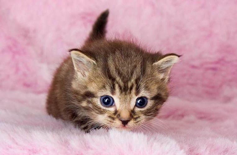 Una foto de Gatito con una manta rosa cuqui (esto que lees al pasar encima el ratón es el Alt)