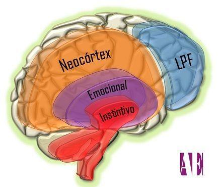 cerebro-triuno